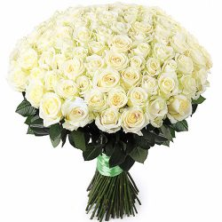 фото 101 біла троянда