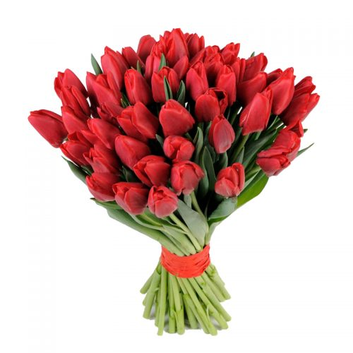 49 червоних тюльпанів