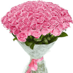 101 троянда Аква фото