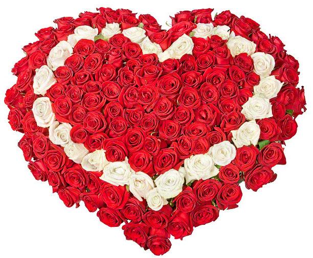 101 троянда серцем червона, біла, червона фото