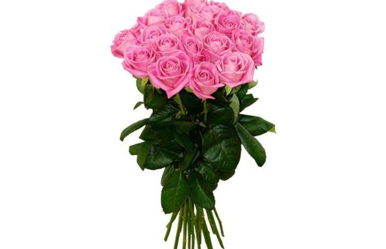 21 троянда Аква фото