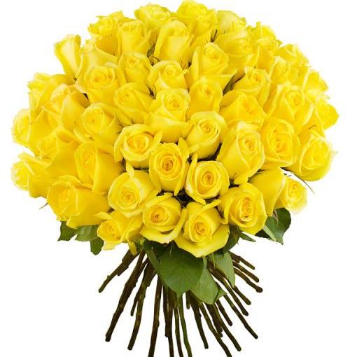 букет 51 жовта троянда фото