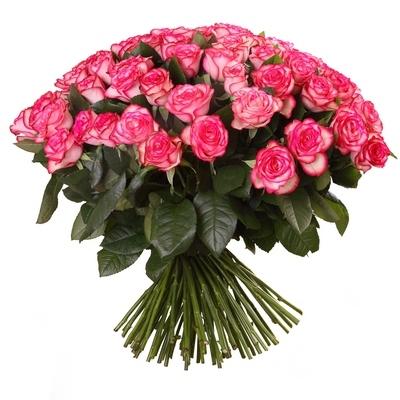 101 джумілія троянда фото