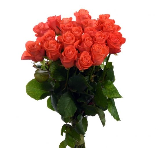 21 троянда Вау фото