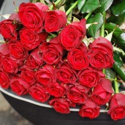 51 троянда фото