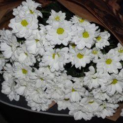 11 білих хризантем фото