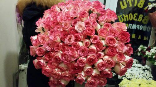101 троянда джумілія фото
