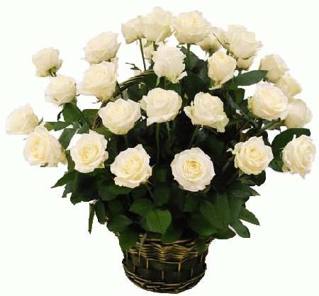 35 білих троянд в кошику