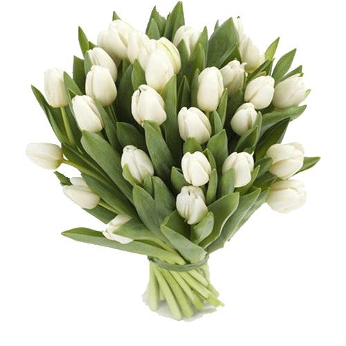 фото товару 25 белых тюльпанов