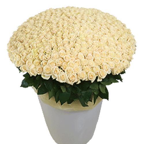 300 білих троянд у вазоні фото