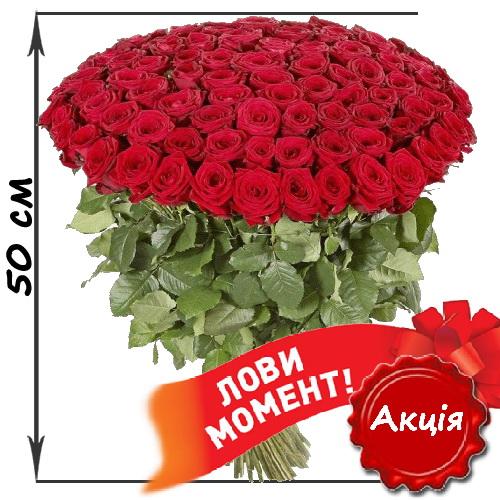 фото товару 101 червона троянда (50см)
