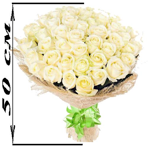 51 біла троянда (50 см) фото