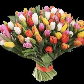 99 різнокольорових тюльпанів