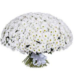 Фото товару 101 ромашкова хризантема