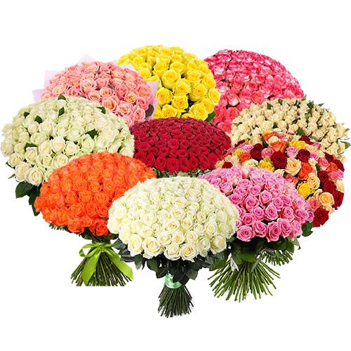 картинка 1001 троянда різних сортів