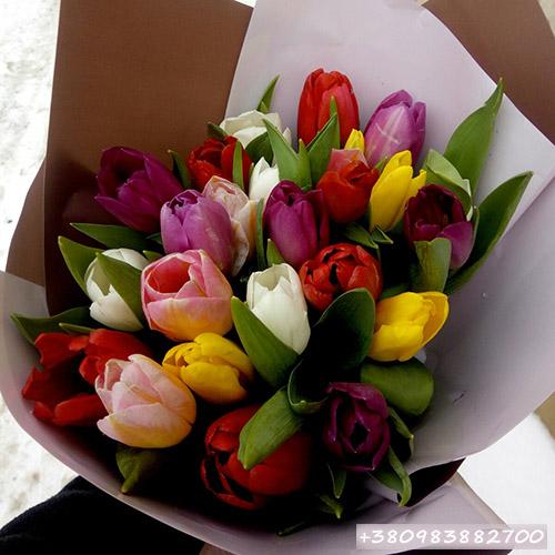 різнокольорові тюльпани